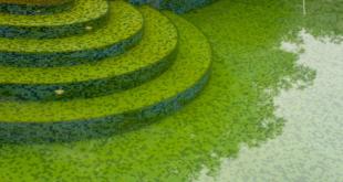 acqua verde in piscina