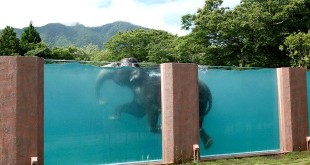Curiosità piscina