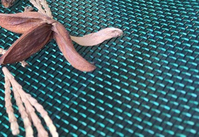 rimuovere le foglie dalla copertura invernale rete