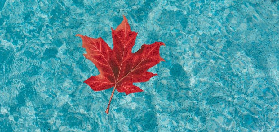 foglie in piscina acqua torbida