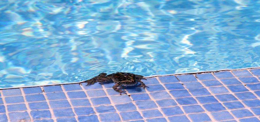 rane in piscina
