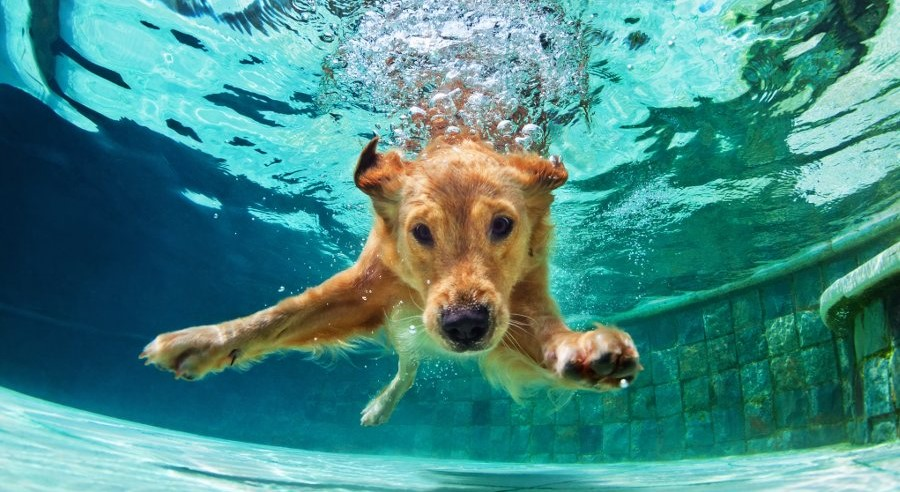cani in piscina e acqua clorata