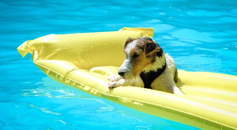 rischi cani in piscina